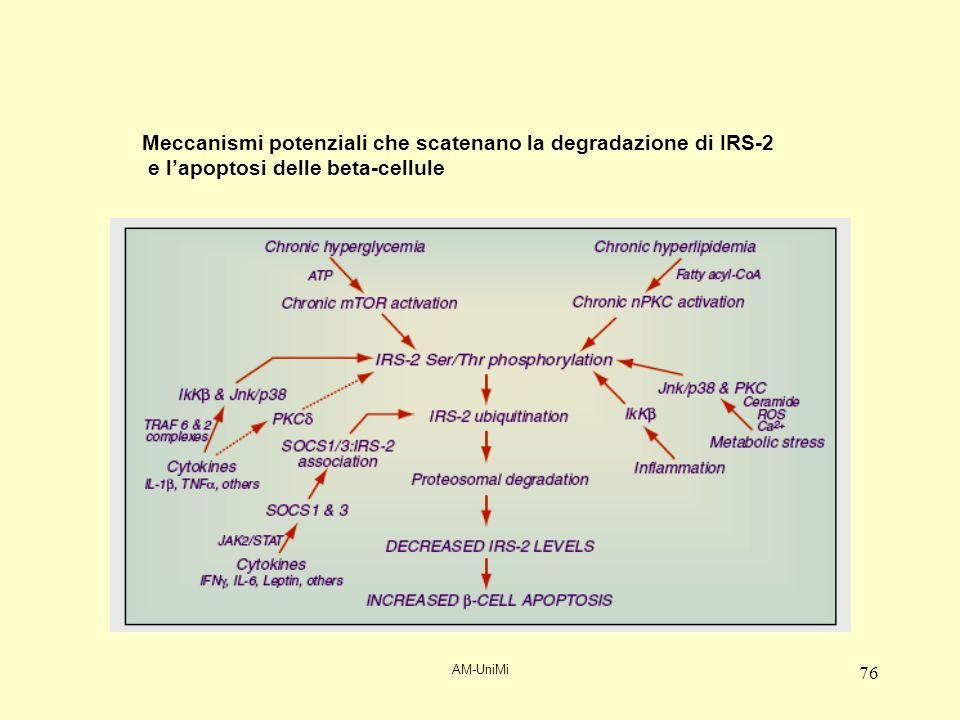 AM-UniMi 76 Meccanismi potenziali che scatenano la degradazione di IRS-2 e lapoptosi delle beta-cellule