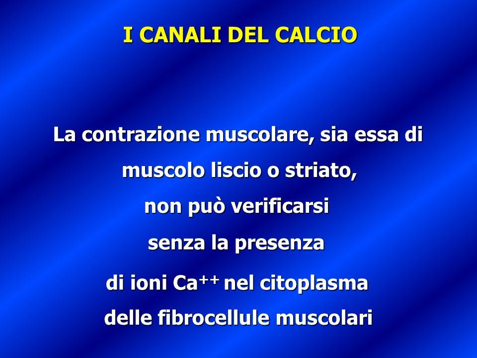 La contrazione muscolare, sia essa di muscolo liscio o striato, senza la presenza di ioni Ca ++ nel citoplasma delle fibrocellule muscolari I CANALI D