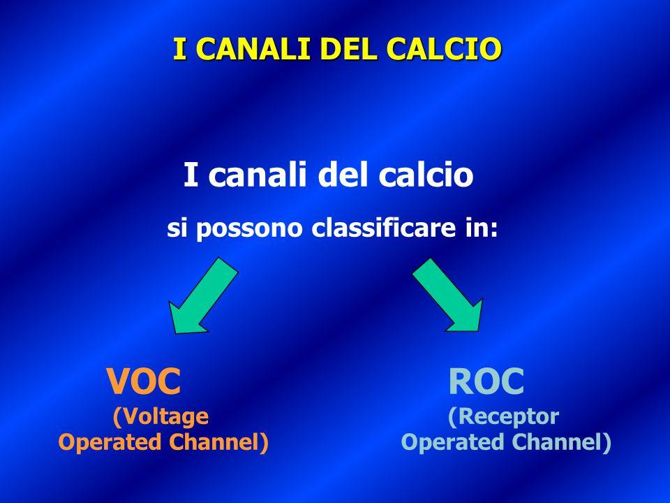 I canali del calcio si possono classificare in: VOC (Voltage Operated Channel) ROC (Receptor Operated Channel) I CANALI DEL CALCIO