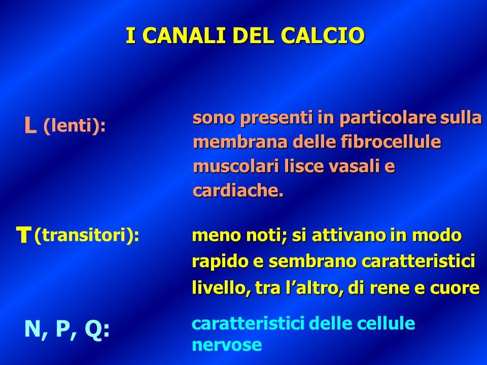 L T N, P, Q: (lenti): (transitori): sono presenti in particolare sulla membrana delle fibrocellule muscolari lisce vasali e cardiache. meno noti; si a