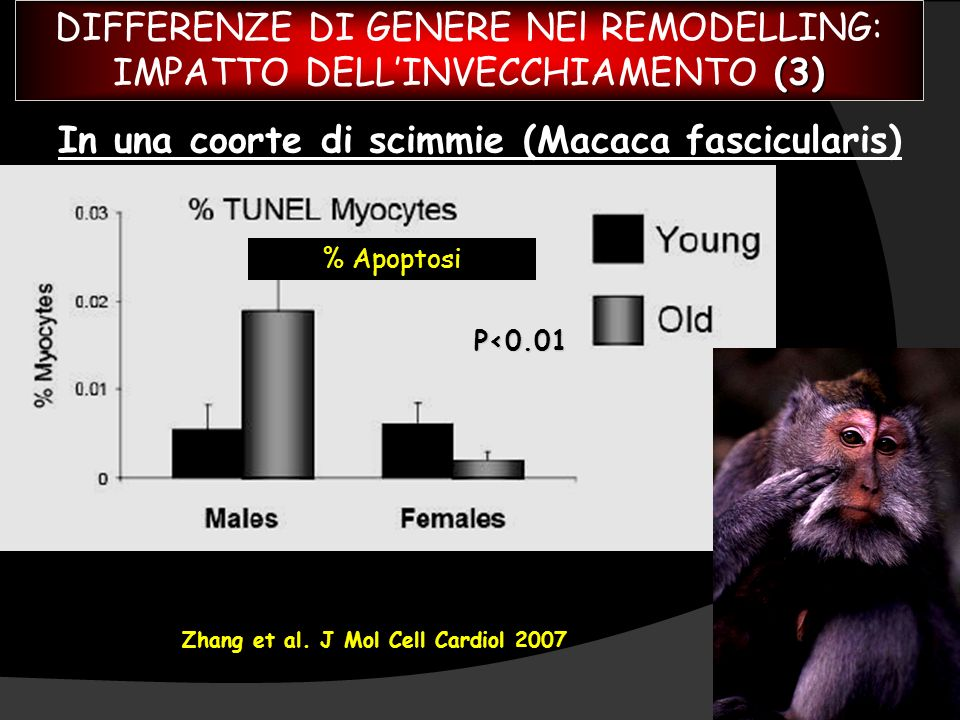 Zhang et al. J Mol Cell Cardiol 2007 P<0.01 In una coorte di scimmie (Macaca fascicularis) % Apoptosi DIFFERENZE DI GENERE NEl REMODELLING: (3) IMPATT