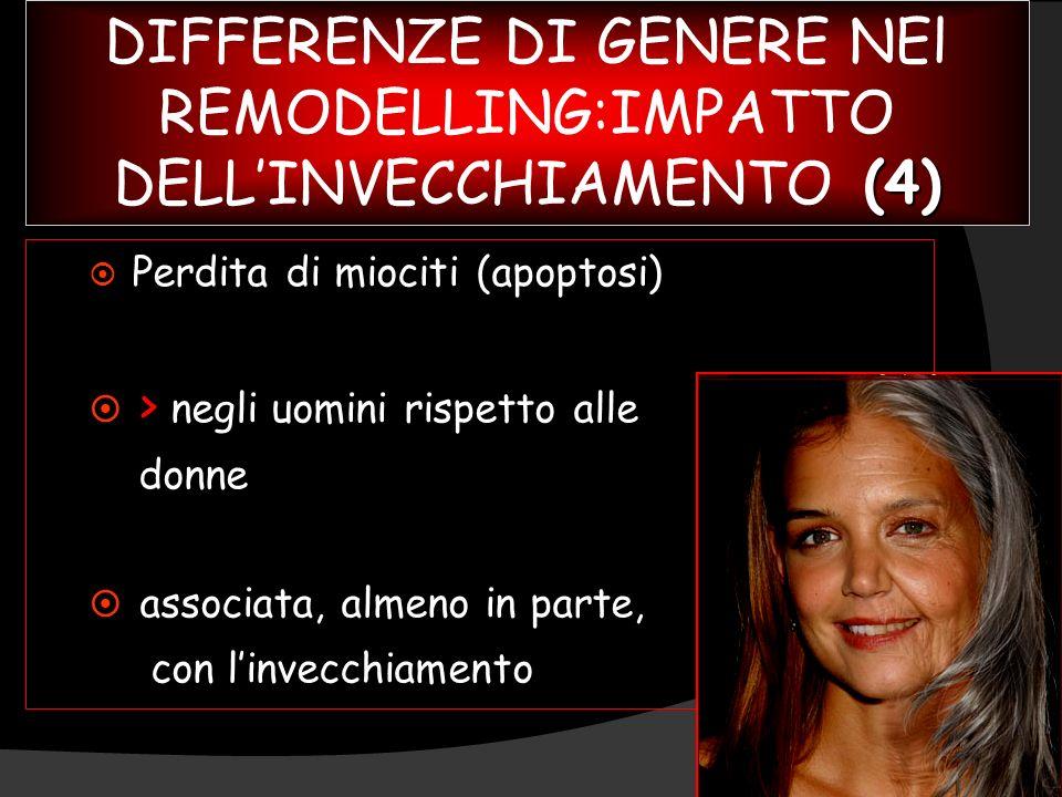 (4) DIFFERENZE DI GENERE NEl REMODELLING:IMPATTO DELLINVECCHIAMENTO (4) ¤ Perdita di miociti (apoptosi) ¤ ¤ > negli uomini rispetto alle donne ¤ ¤ ass