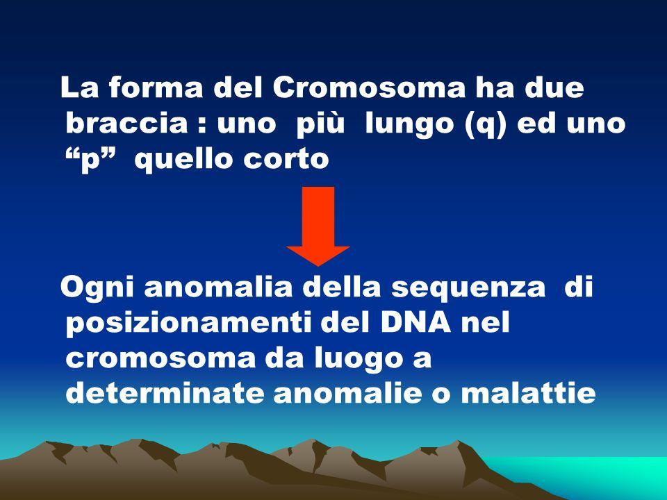 La forma del Cromosoma ha due braccia : uno più lungo (q) ed uno p quello corto Ogni anomalia della sequenza di posizionamenti del DNA nel cromosoma da luogo a determinate anomalie o malattie