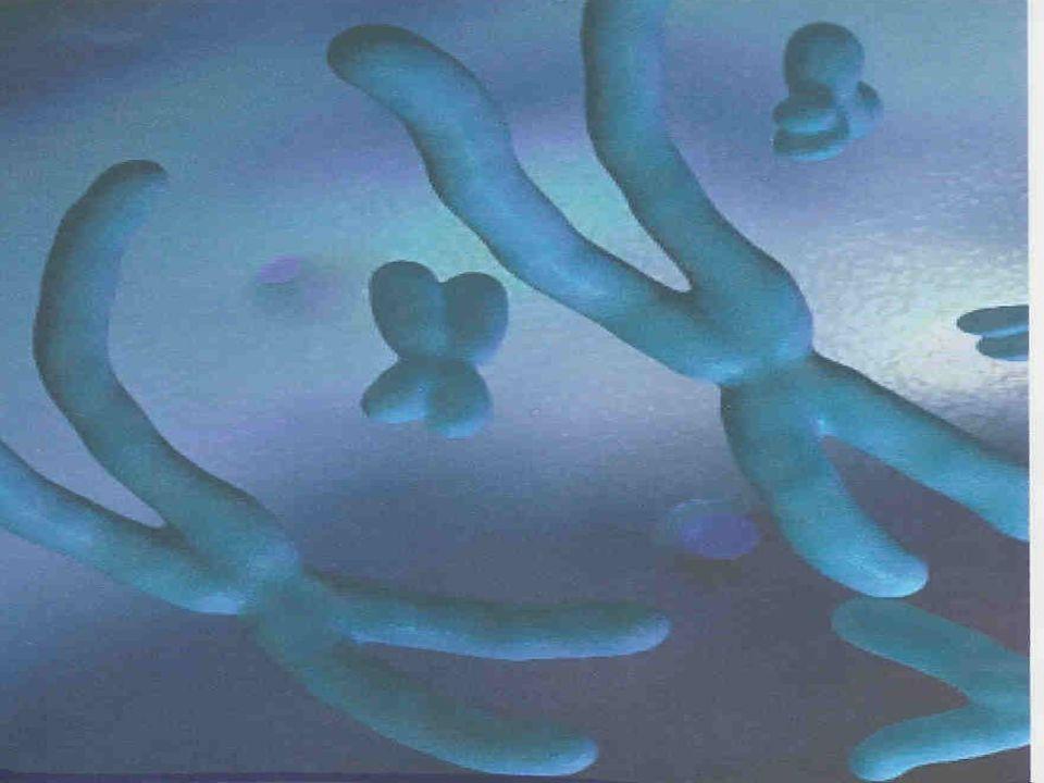 Questa microentità (sequenza del DNA nel Cromosoma) contiene le istruzioni per tutte le cellule: dalla nascita (embriogenesi) alla morte !