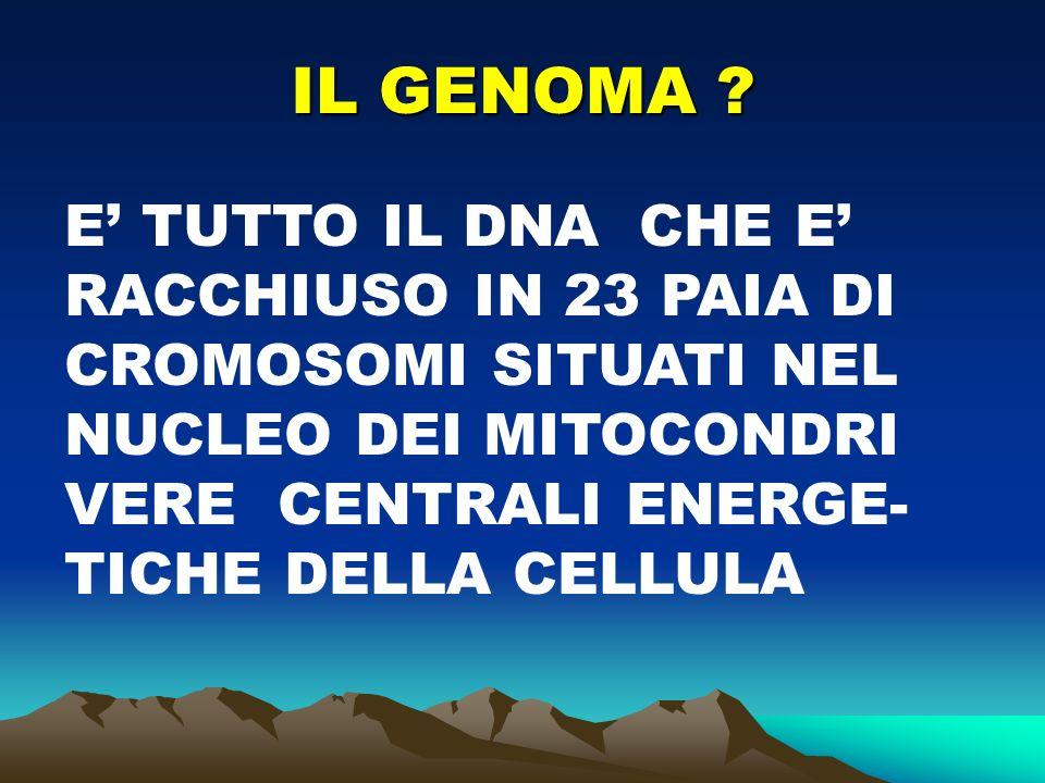 IL GENOMA .