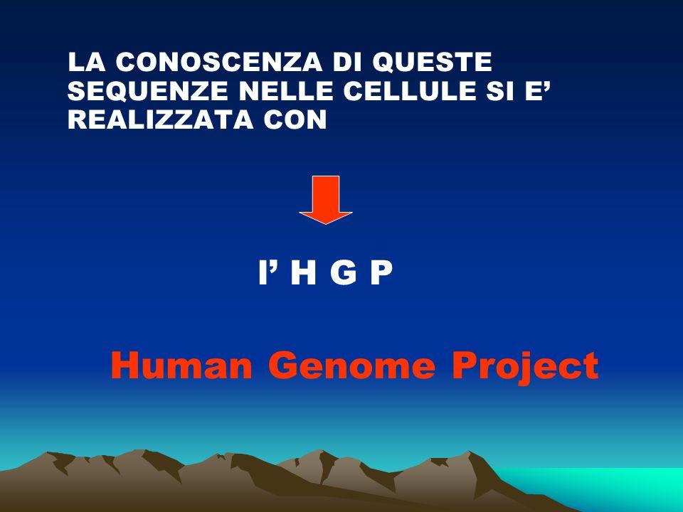 LA CONOSCENZA DI QUESTE SEQUENZE NELLE CELLULE SI E REALIZZATA CON l H G P Human Genome Project