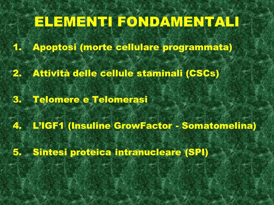 ELEMENTI FONDAMENTALI 1.Apoptosi (morte cellulare programmata) 2.Attività delle cellule staminali (CSCs) 3.Telomere e Telomerasi 4.LIGF1 (Insuline GrowFactor - Somatomelina) 5.Sintesi proteica intranucleare (SPI)