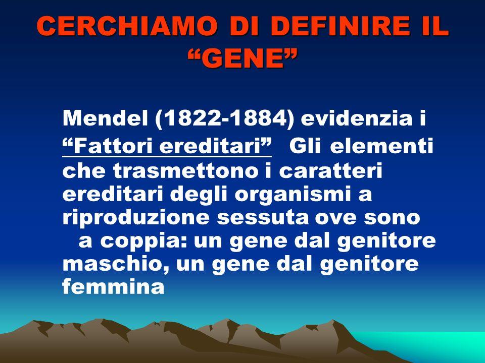 CERCHIAMO DI DEFINIRE IL GENE Mendel (1822-1884) evidenzia i Fattori ereditari Gli elementi che trasmettono i caratteri ereditari degli organismi a riproduzione sessuta ove sono a coppia: un gene dal genitore maschio, un gene dal genitore femmina