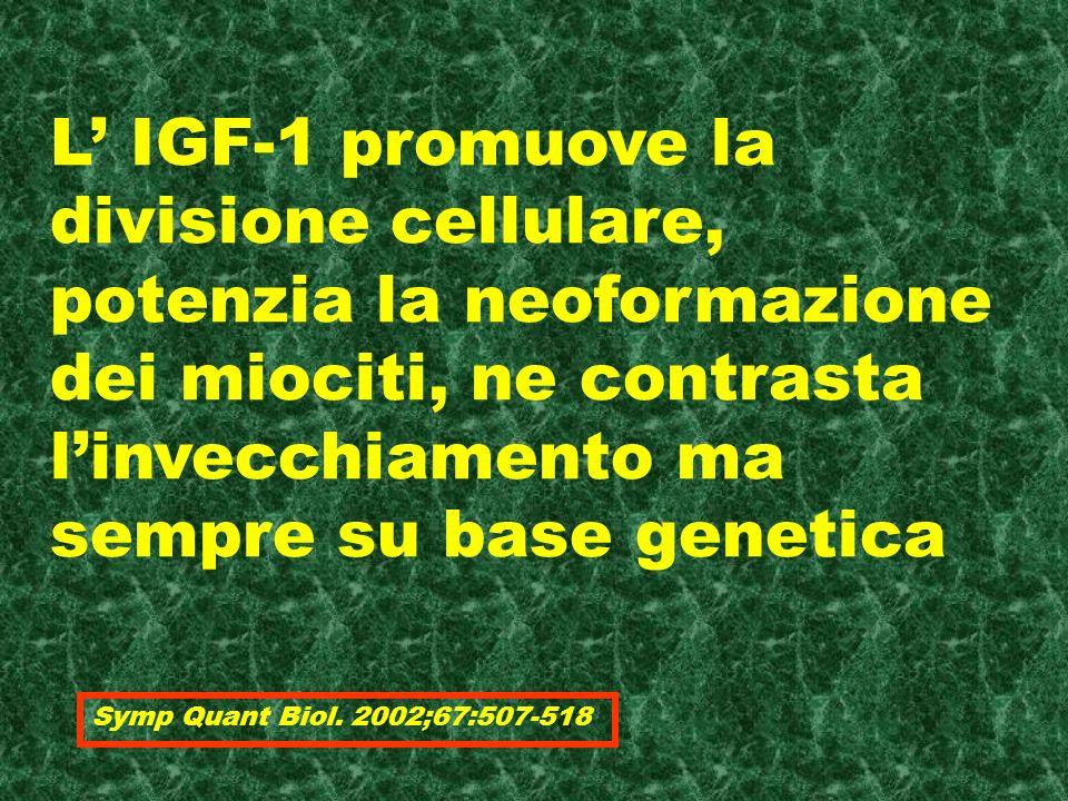 L IGF-1 promuove la divisione cellulare, potenzia la neoformazione dei miociti, ne contrasta linvecchiamento ma sempre su base genetica Symp Quant Biol.