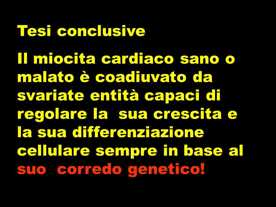Tesi conclusive Il miocita cardiaco sano o malato è coadiuvato da svariate entità capaci di regolare la sua crescita e la sua differenziazione cellulare sempre in base al suo corredo genetico!