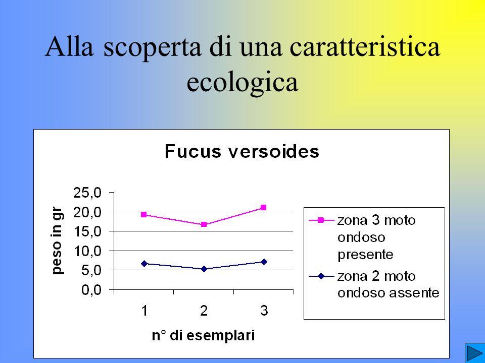 Ulva Fucus virsoides