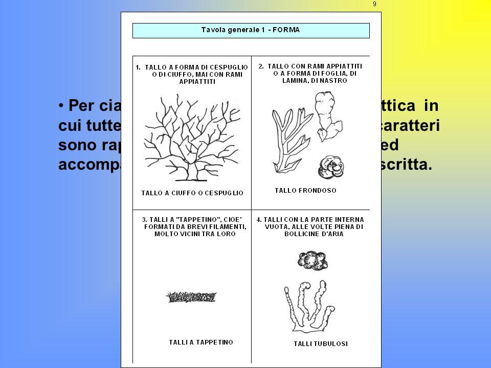 Questo metodo usa tre caratteri principali: FORMA COLORE RAMIFICAZIONE