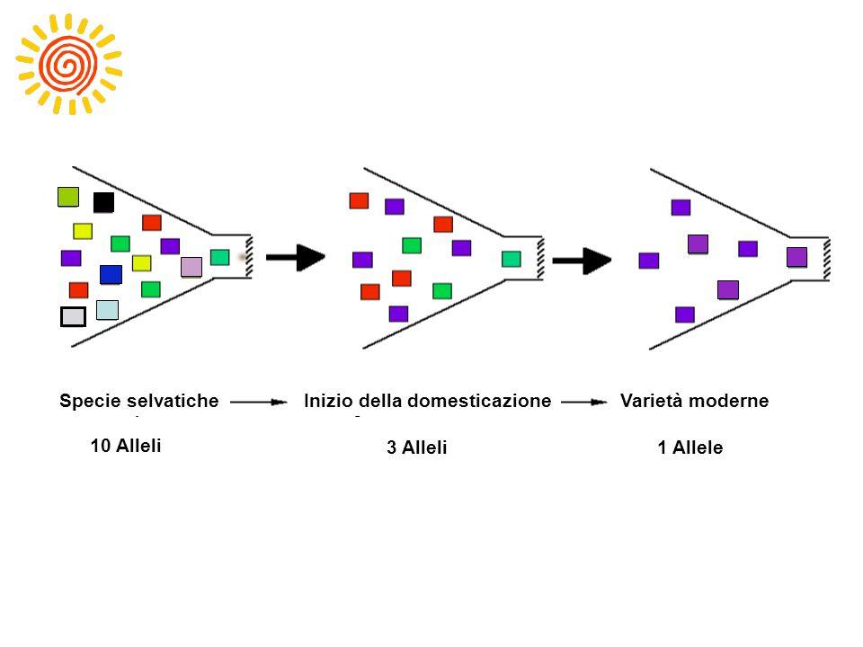 10 alleles3 alleles1 allele Inizio della domesticazioneSpecie selvaticheVarietà moderne 10 Alleli 3 Alleli1 Allele