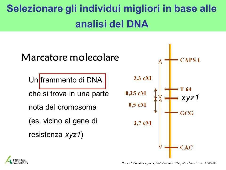 Selezionare gli individui migliori in base alle analisi del DNA Un frammento di DNA che si trova in una parte nota del cromosoma (es. vicino al gene d