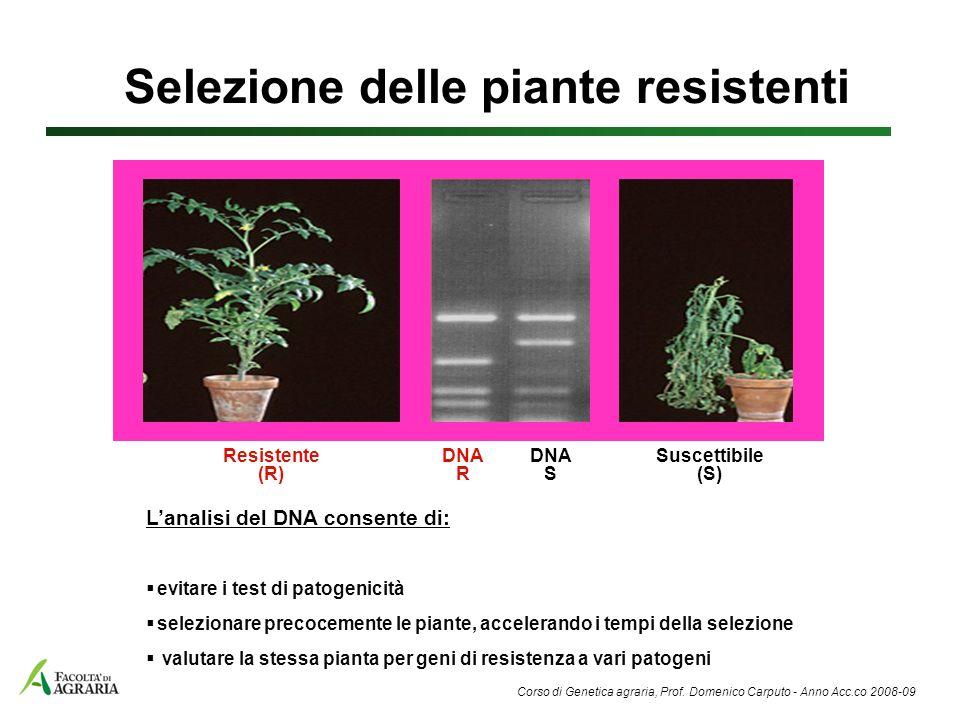 Lanalisi del DNA consente di: evitare i test di patogenicità selezionare precocemente le piante, accelerando i tempi della selezione valutare la stess