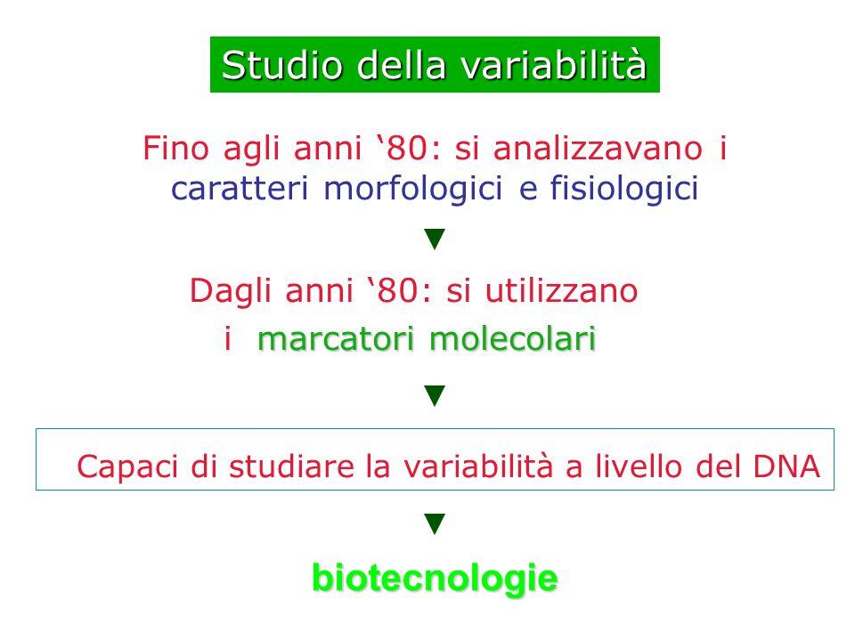 caratteri morfologici e fisiologici Studio della variabilità Espressione del genotipo (cioè che è scritto nella molecola di DNA) e dell ambiente Ereditabile e perciò trasmissibile Variabile e non trasmissibile
