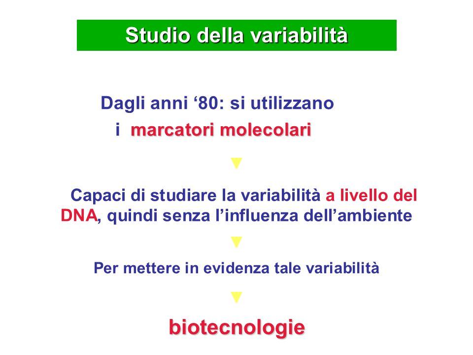 IIIIIIIVVVI VIIIVII IXXXIXII XIVXIII XV Gruppi di associazione Corso di Genetica agraria, Prof.