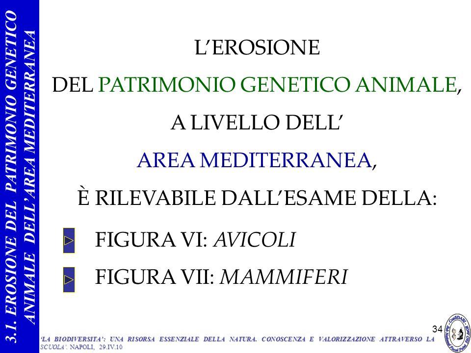 34 FIGURA VI: AVICOLI FIGURA VII: MAMMIFERI 3.1. EROSIONE DEL PATRIMONIO GENETICO ANIMALE DELLAREA MEDITERRANEA LEROSIONE DEL PATRIMONIO GENETICO ANIM