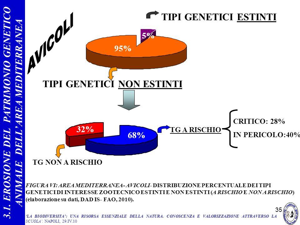 35 68% 32% 49% FIGURA VI: AREA MEDITERRANEA- AVICOLI- DISTRIBUZIONE PERCENTUALE DEI TIPI GENETICI DI INTERESSE ZOOTECNICO ESTINTI E NON ESTINTI (A RIS