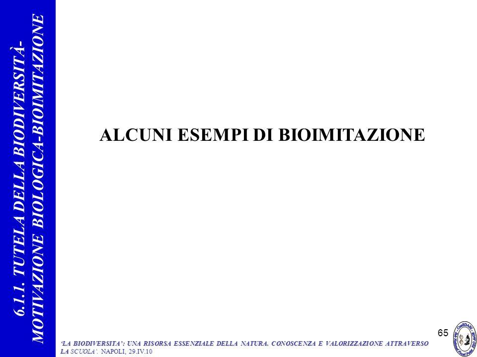 65 ALCUNI ESEMPI DI BIOIMITAZIONE 6.1.1. TUTELA DELLA BIODIVERSITÀ- MOTIVAZIONE BIOLOGICA-BIOIMITAZIONE LA BIODIVERSITA: UNA RISORSA ESSENZIALE DELLA