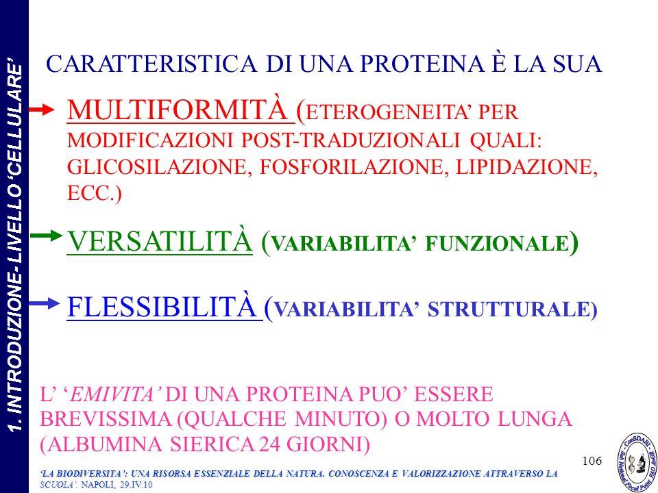 CARATTERISTICA DI UNA PROTEINA È LA SUA MULTIFORMITÀ ( ETEROGENEITA PER MODIFICAZIONI POST-TRADUZIONALI QUALI: GLICOSILAZIONE, FOSFORILAZIONE, LIPIDAZIONE, ECC.) VERSATILITÀ ( VARIABILITA FUNZIONALE ) FLESSIBILITÀ ( VARIABILITA STRUTTURALE) L EMIVITA DI UNA PROTEINA PUO ESSERE BREVISSIMA (QUALCHE MINUTO) O MOLTO LUNGA (ALBUMINA SIERICA 24 GIORNI) 106 1.