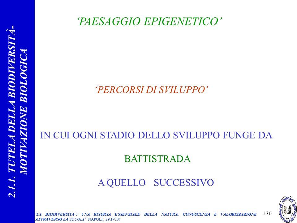 PAESAGGIO EPIGENETICO PERCORSI DI SVILUPPO IN CUI OGNI STADIO DELLO SVILUPPO FUNGE DA BATTISTRADA A QUELLO SUCCESSIVO 2.1.1.