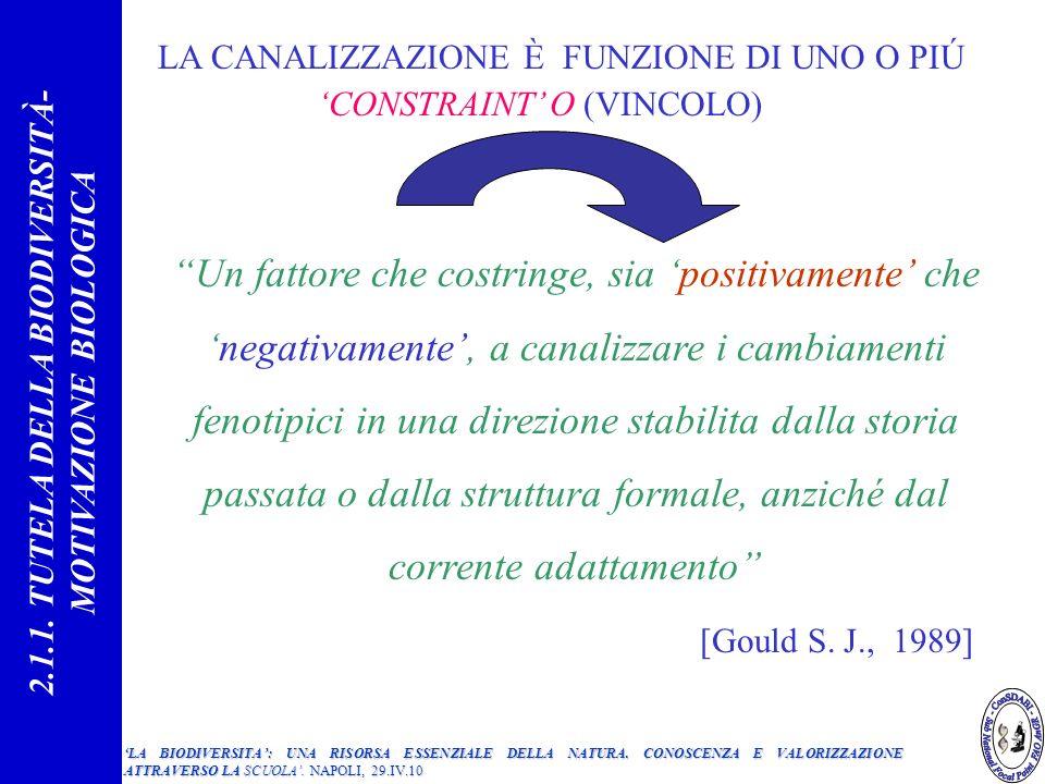 CONSTRAINT O (VINCOLO) Un fattore che costringe, sia positivamente chenegativamente, a canalizzare i cambiamenti fenotipici in una direzione stabilita dalla storia passata o dalla struttura formale, anziché dal corrente adattamento [Gould S.
