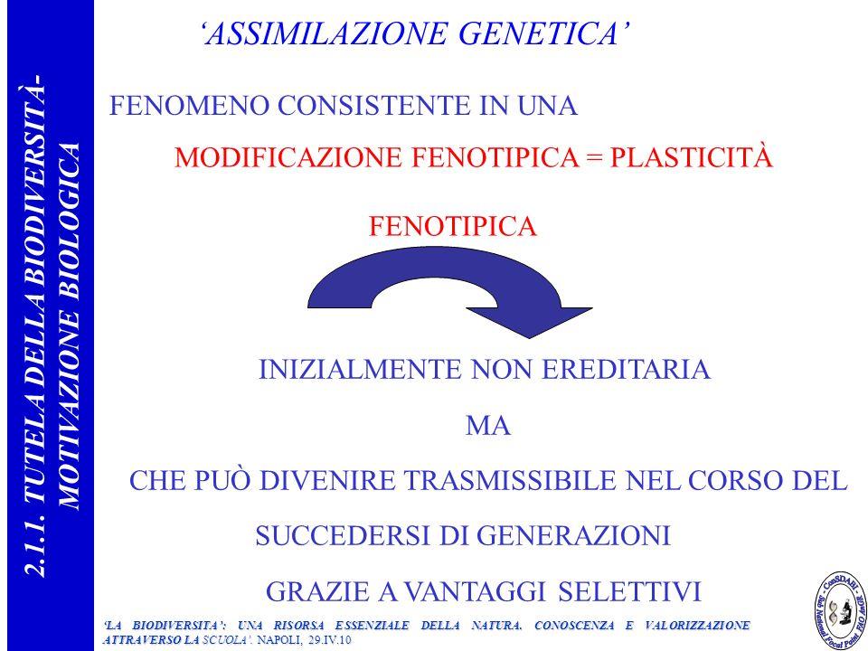 ASSIMILAZIONE GENETICA FENOMENO CONSISTENTE IN UNA MODIFICAZIONE FENOTIPICA = PLASTICITÀ FENOTIPICA INIZIALMENTE NON EREDITARIA MA CHE PUÒ DIVENIRE TRASMISSIBILE NEL CORSO DEL SUCCEDERSI DI GENERAZIONI GRAZIE A VANTAGGI SELETTIVI 2.1.1.