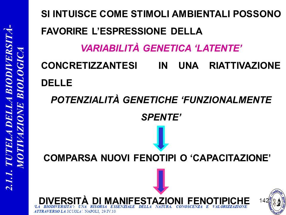 142 SI INTUISCE COME STIMOLI AMBIENTALI POSSONO FAVORIRE LESPRESSIONE DELLA VARIABILITÀ GENETICA LATENTE CONCRETIZZANTESI IN UNA RIATTIVAZIONE DELLE POTENZIALITÀ GENETICHE FUNZIONALMENTE SPENTE COMPARSA NUOVI FENOTIPI O CAPACITAZIONE DIVERSITÀ DI MANIFESTAZIONI FENOTIPICHE 2.1.1.