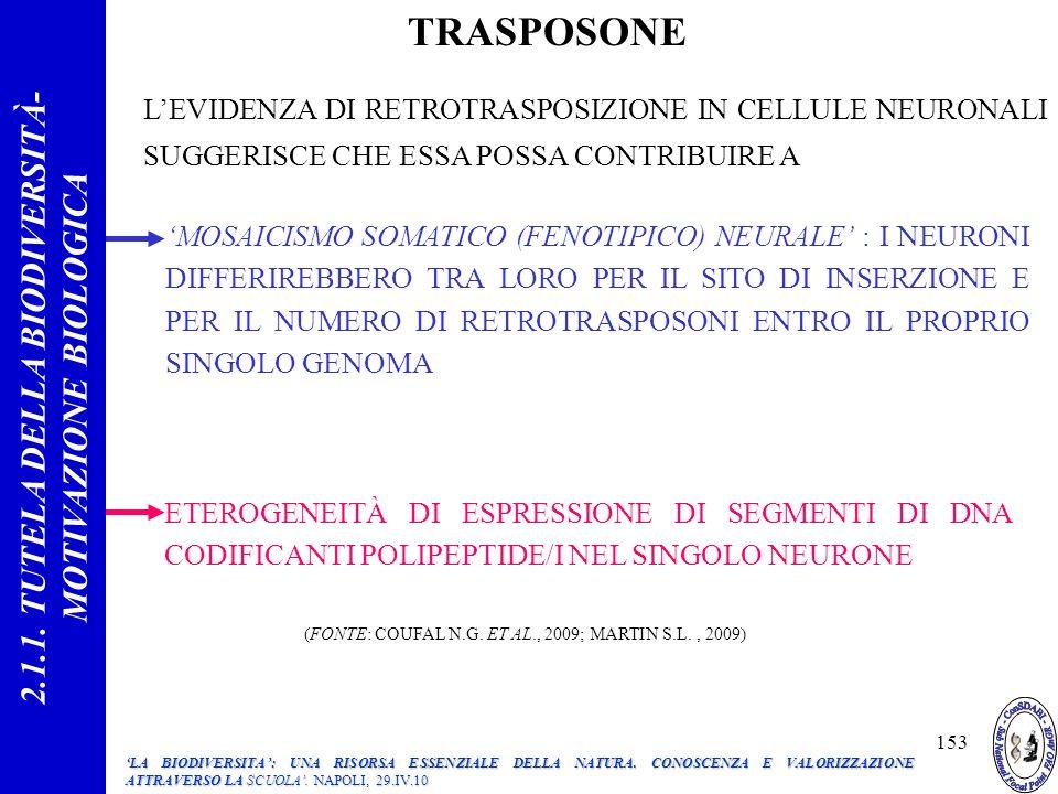 LEVIDENZA DI RETROTRASPOSIZIONE IN CELLULE NEURONALI SUGGERISCE CHE ESSA POSSA CONTRIBUIRE A MOSAICISMO SOMATICO (FENOTIPICO) NEURALE : I NEURONI DIFFERIREBBERO TRA LORO PER IL SITO DI INSERZIONE E PER IL NUMERO DI RETROTRASPOSONI ENTRO IL PROPRIO SINGOLO GENOMA ETEROGENEITÀ DI ESPRESSIONE DI SEGMENTI DI DNA CODIFICANTI POLIPEPTIDE/I NEL SINGOLO NEURONE (FONTE: COUFAL N.G.