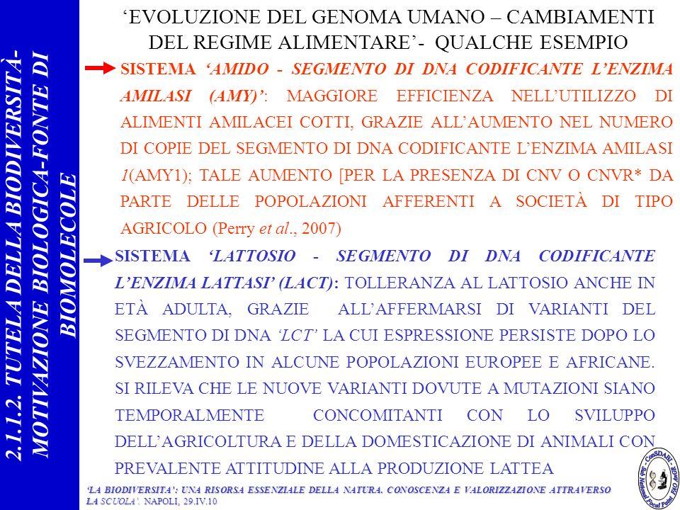 SISTEMA AMIDO - SEGMENTO DI DNA CODIFICANTE LENZIMA AMILASI (AMY): MAGGIORE EFFICIENZA NELLUTILIZZO DI ALIMENTI AMILACEI COTTI, GRAZIE ALLAUMENTO NEL NUMERO DI COPIE DEL SEGMENTO DI DNA CODIFICANTE LENZIMA AMILASI 1(AMY1); TALE AUMENTO [PER LA PRESENZA DI CNV O CNVR* DA PARTE DELLE POPOLAZIONI AFFERENTI A SOCIETÀ DI TIPO AGRICOLO (Perry et al., 2007) EVOLUZIONE DEL GENOMA UMANO – CAMBIAMENTI DEL REGIME ALIMENTARE- QUALCHE ESEMPIO SISTEMA LATTOSIO - SEGMENTO DI DNA CODIFICANTE LENZIMA LATTASI (LACT): TOLLERANZA AL LATTOSIO ANCHE IN ETÀ ADULTA, GRAZIE ALLAFFERMARSI DI VARIANTI DEL SEGMENTO DI DNA LCT LA CUI ESPRESSIONE PERSISTE DOPO LO SVEZZAMENTO IN ALCUNE POPOLAZIONI EUROPEE E AFRICANE.