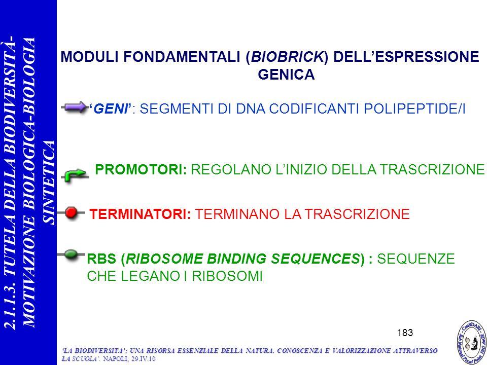MODULI FONDAMENTALI (BIOBRICK) DELLESPRESSIONE GENICA GENI: SEGMENTI DI DNA CODIFICANTI POLIPEPTIDE/I TERMINATORI: TERMINANO LA TRASCRIZIONE RBS (RIBOSOME BINDING SEQUENCES) : SEQUENZE CHE LEGANO I RIBOSOMI PROMOTORI: REGOLANO LINIZIO DELLA TRASCRIZIONE 183 2.1.1.3.