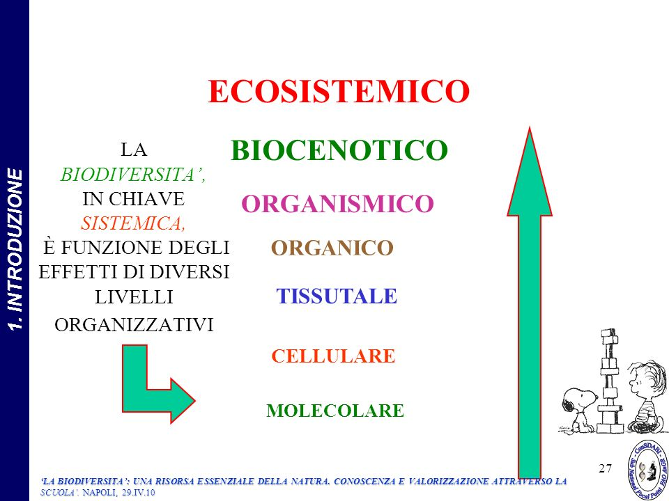 LA BIODIVERSITA, IN CHIAVE SISTEMICA, È FUNZIONE DEGLI EFFETTI DI DIVERSI LIVELLI ORGANIZZATIVI MOLECOLARE CELLULARE TISSUTALE ORGANICO ORGANISMICO BIOCENOTICO ECOSISTEMICO 27 1.