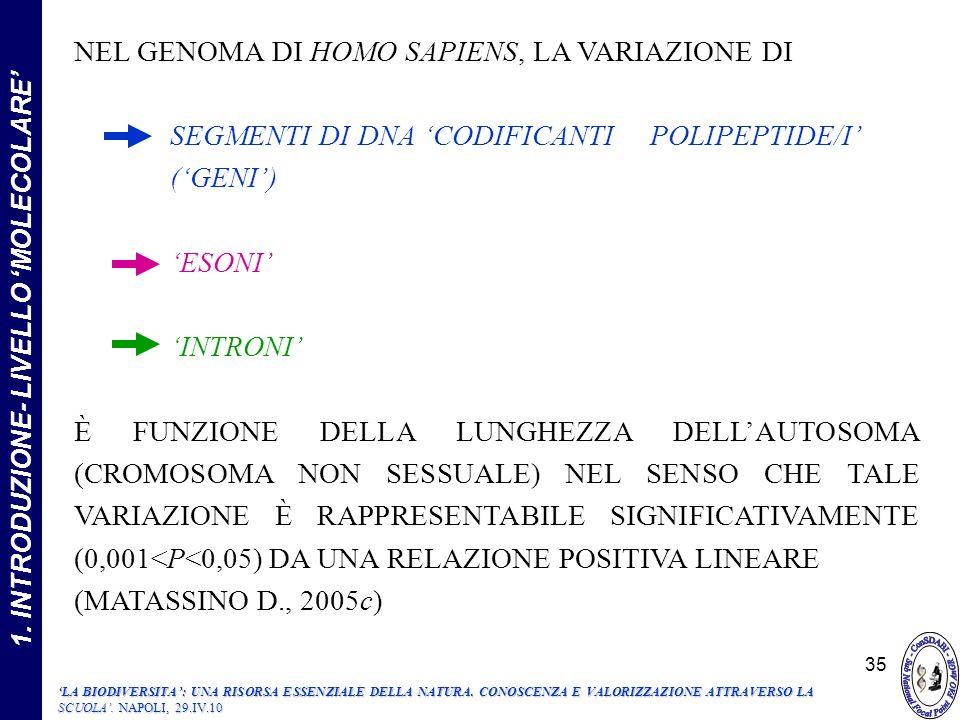 NEL GENOMA DI HOMO SAPIENS, LA VARIAZIONE DI SEGMENTI DI DNA CODIFICANTI POLIPEPTIDE/I (GENI) ESONI INTRONI È FUNZIONE DELLA LUNGHEZZA DELLAUTOSOMA (CROMOSOMA NON SESSUALE) NEL SENSO CHE TALE VARIAZIONE È RAPPRESENTABILE SIGNIFICATIVAMENTE (0,001<P<0,05) DA UNA RELAZIONE POSITIVA LINEARE (MATASSINO D., 2005c) 1.