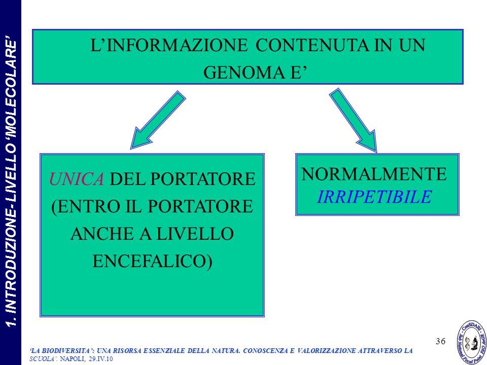 LINFORMAZIONE CONTENUTA IN UN GENOMA E UNICA DEL PORTATORE (ENTRO IL PORTATORE ANCHE A LIVELLO ENCEFALICO) NORMALMENTE IRRIPETIBILE 36 1.