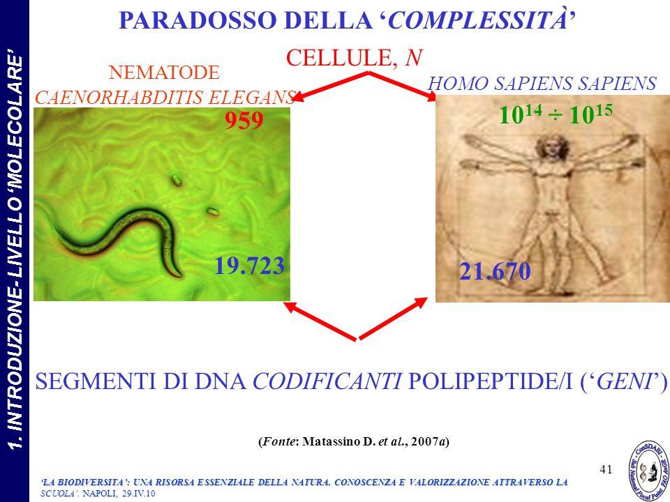 NEMATODE CAENORHABDITIS ELEGANS HOMO SAPIENS SAPIENS CELLULE, N SEGMENTI DI DNA CODIFICANTI POLIPEPTIDE/I (GENI) 959 19.723 22.012 PARADOSSO DELLA COMPLESSITÀ 10 14 ÷ 10 15 21.670 41 LA BIODIVERSITA: UNA RISORSA ESSENZIALE DELLA NATURA.