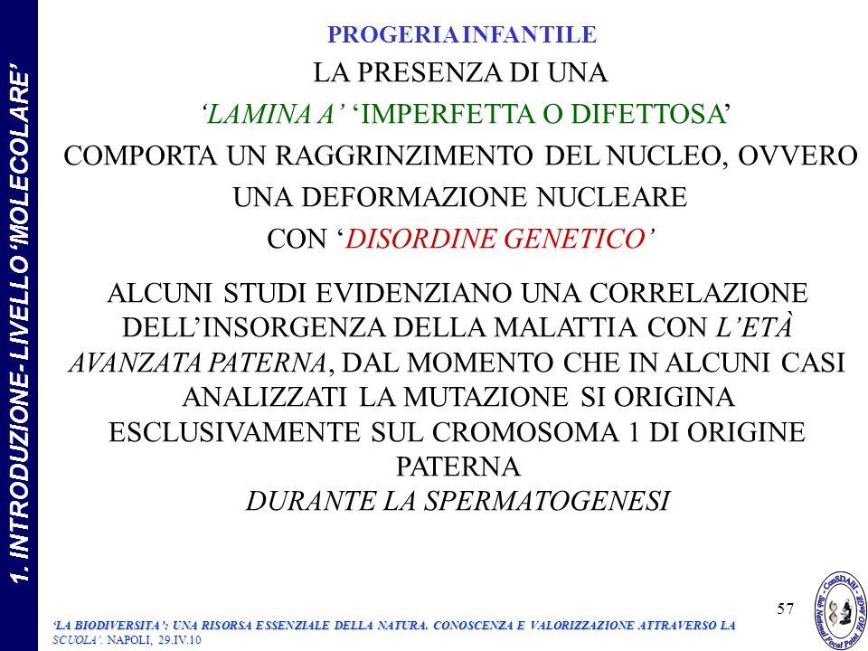LA PRESENZA DI UNA LAMINA A IMPERFETTA O DIFETTOSA COMPORTA UN RAGGRINZIMENTO DEL NUCLEO, OVVERO UNA DEFORMAZIONE NUCLEARE CON DISORDINE GENETICO ALCUNI STUDI EVIDENZIANO UNA CORRELAZIONE DELLINSORGENZA DELLA MALATTIA CON LETÀ AVANZATA PATERNA, DAL MOMENTO CHE IN ALCUNI CASI ANALIZZATI LA MUTAZIONE SI ORIGINA ESCLUSIVAMENTE SUL CROMOSOMA 1 DI ORIGINE PATERNA DURANTE LA SPERMATOGENESI PROGERIA INFANTILE 57 1.