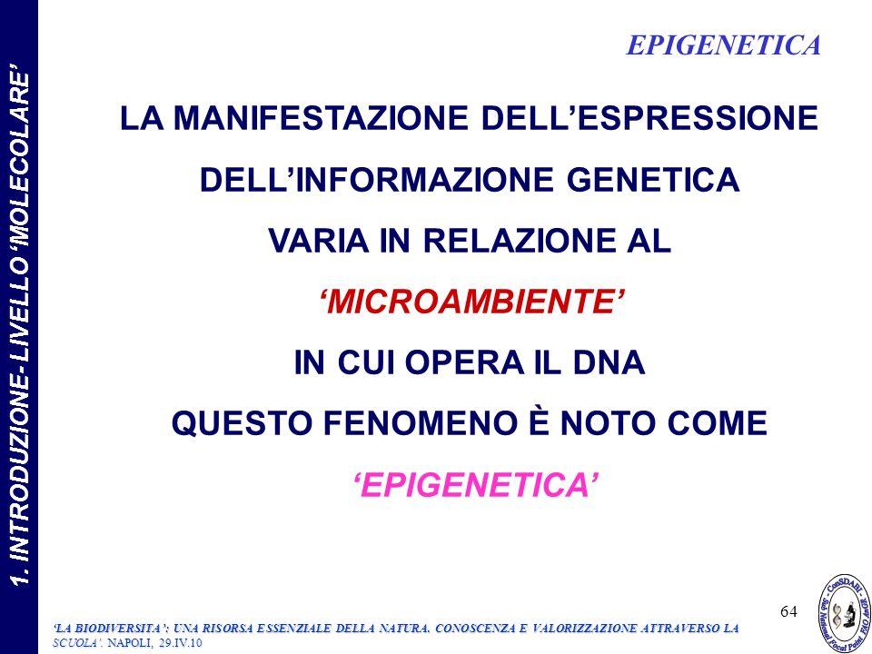 LA MANIFESTAZIONE DELLESPRESSIONE DELLINFORMAZIONE GENETICA VARIA IN RELAZIONE AL MICROAMBIENTE IN CUI OPERA IL DNA QUESTO FENOMENO È NOTO COME EPIGENETICA 1.