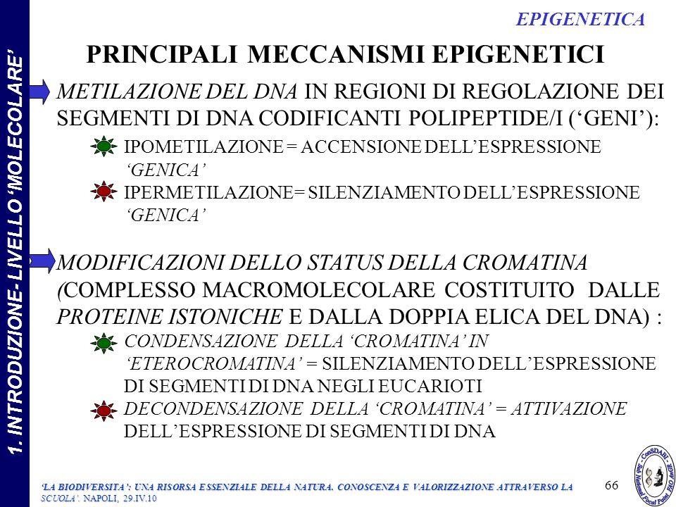 METILAZIONE DEL DNA IN REGIONI DI REGOLAZIONE DEI SEGMENTI DI DNA CODIFICANTI POLIPEPTIDE/I (GENI): IPOMETILAZIONE = ACCENSIONE DELLESPRESSIONE GENICA IPERMETILAZIONE= SILENZIAMENTO DELLESPRESSIONE GENICA MODIFICAZIONI DELLO STATUS DELLA CROMATINA (COMPLESSO MACROMOLECOLARE COSTITUITO DALLE PROTEINE ISTONICHE E DALLA DOPPIA ELICA DEL DNA) : CONDENSAZIONE DELLA CROMATINA INETEROCROMATINA = SILENZIAMENTO DELLESPRESSIONE DI SEGMENTI DI DNA NEGLI EUCARIOTI DECONDENSAZIONE DELLA CROMATINA = ATTIVAZIONE DELLESPRESSIONE DI SEGMENTI DI DNA PRINCIPALI MECCANISMI EPIGENETICI 66 EPIGENETICA 1.