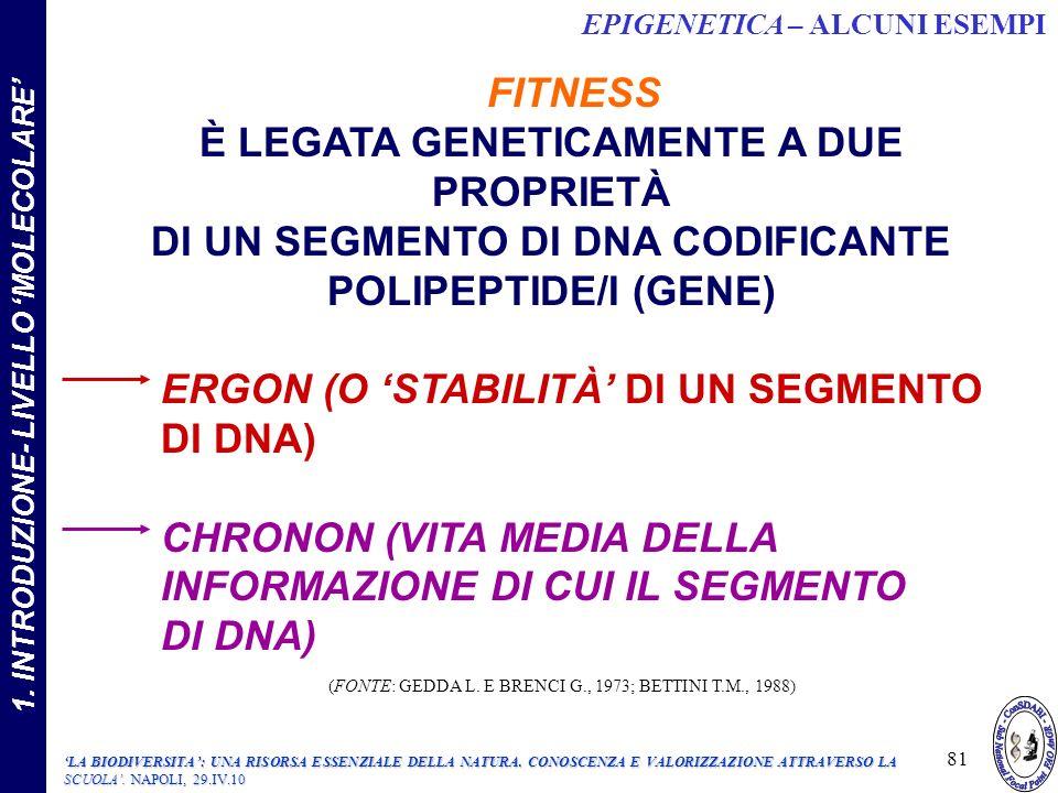 FITNESS È LEGATA GENETICAMENTE A DUE PROPRIETÀ DI UN SEGMENTO DI DNA CODIFICANTE POLIPEPTIDE/I (GENE) ERGON (O STABILITÀ DI UN SEGMENTO DI DNA) CHRONON (VITA MEDIA DELLA INFORMAZIONE DI CUI IL SEGMENTO DI DNA) (FONTE: GEDDA L.