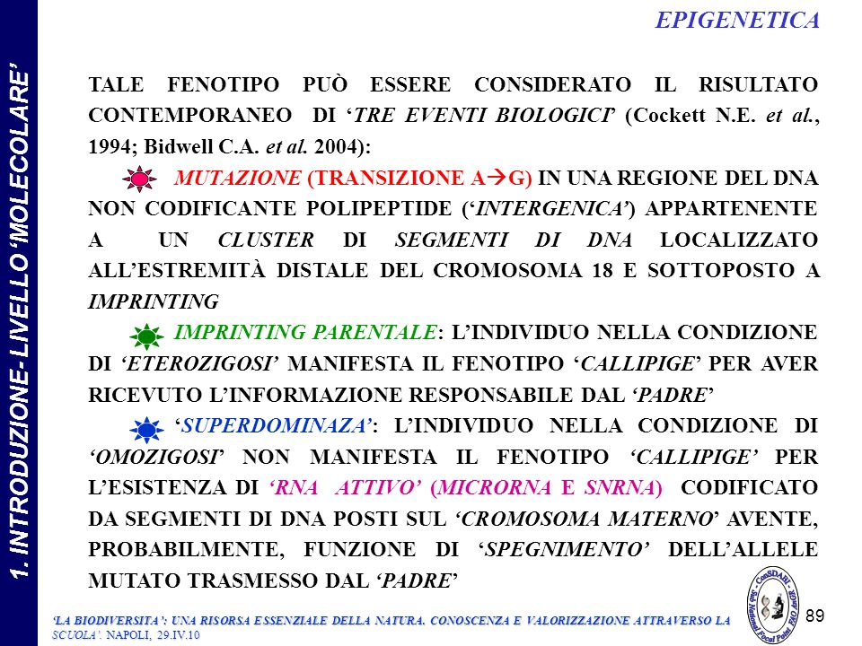 TALE FENOTIPO PUÒ ESSERE CONSIDERATO IL RISULTATO CONTEMPORANEO DI TRE EVENTI BIOLOGICI (Cockett N.E.