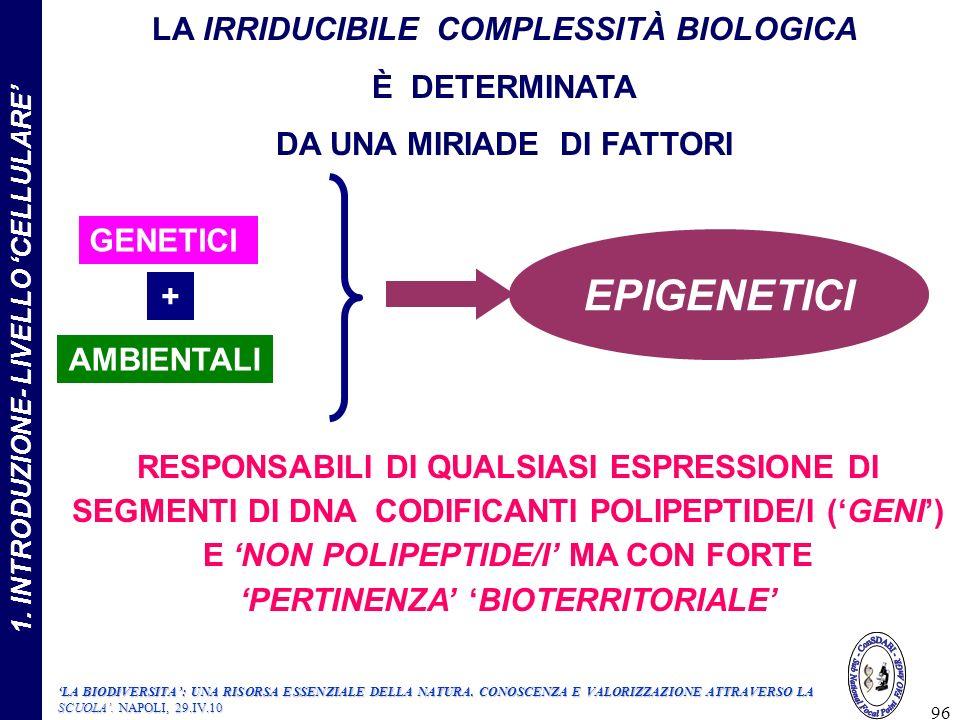 96 RESPONSABILI DI QUALSIASI ESPRESSIONE DI SEGMENTI DI DNA CODIFICANTI POLIPEPTIDE/I (GENI) E NON POLIPEPTIDE/I MA CON FORTE PERTINENZA BIOTERRITORIALE LA IRRIDUCIBILE COMPLESSITÀ BIOLOGICA È DETERMINATA DA UNA MIRIADE DI FATTORI GENETICI EPIGENETICI + AMBIENTALI LA BIODIVERSITA: UNA RISORSA ESSENZIALE DELLA NATURA.