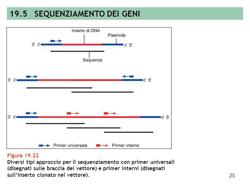 24 Figura 19.21 Metodo di sequenziamento a terminazione di catena ideato da Sanger, chiamato anche metodo dideossi. 19.5 SEQUENZIAMENTO DEI GENI