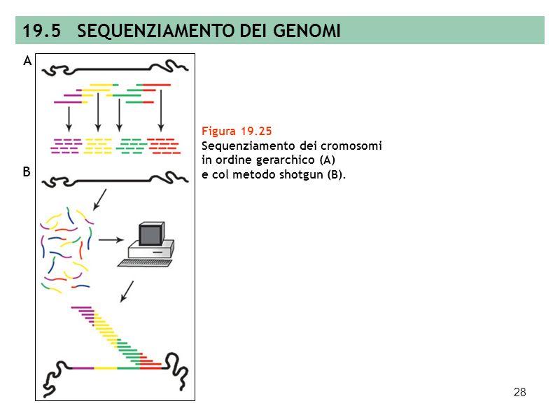 27 Figura 19.24 Sequenziamento automatico. 19.5 SEQUENZIAMENTO DEI GENI