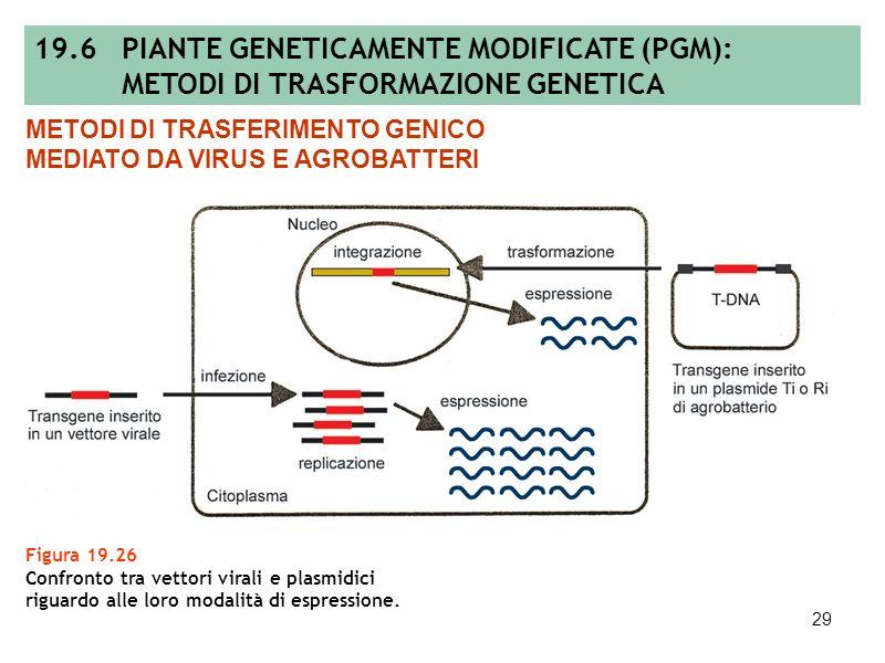 28 Figura 19.25 Sequenziamento dei cromosomi in ordine gerarchico (A) e col metodo shotgun (B). 19.5 SEQUENZIAMENTO DEI GENOMI A B