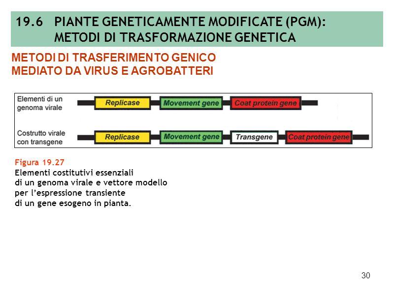 29 Figura 19.26 Confronto tra vettori virali e plasmidici riguardo alle loro modalità di espressione. 19.6 PIANTE GENETICAMENTE MODIFICATE (PGM): METO