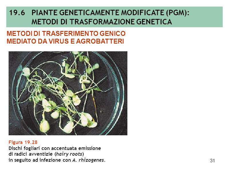 30 Figura 19.27 Elementi costitutivi essenziali di un genoma virale e vettore modello per lespressione transiente di un gene esogeno in pianta. METODI