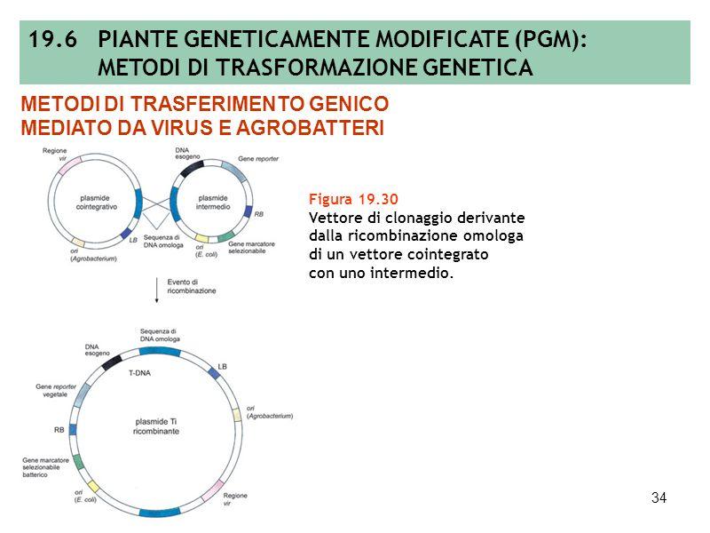 33 Tabella 19.4 Elenco di sistemi di geni marcatori selezionabili e di geni reporter usati per la trasformazione genetica delle piante. METODI DI TRAS