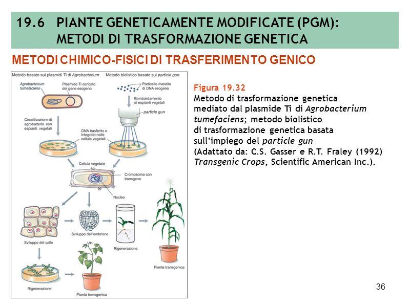 35 Figura 19.31 Rappresentazione schematica di un vettore binario e di un plasmide helper in agrobatterio. METODI DI TRASFERIMENTO GENICO MEDIATO DA V