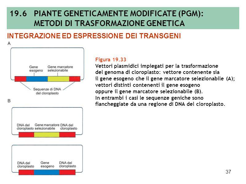 36 Figura 19.32 Metodo di trasformazione genetica mediato dal plasmide Ti di Agrobacterium tumefaciens; metodo biolistico di trasformazione genetica b